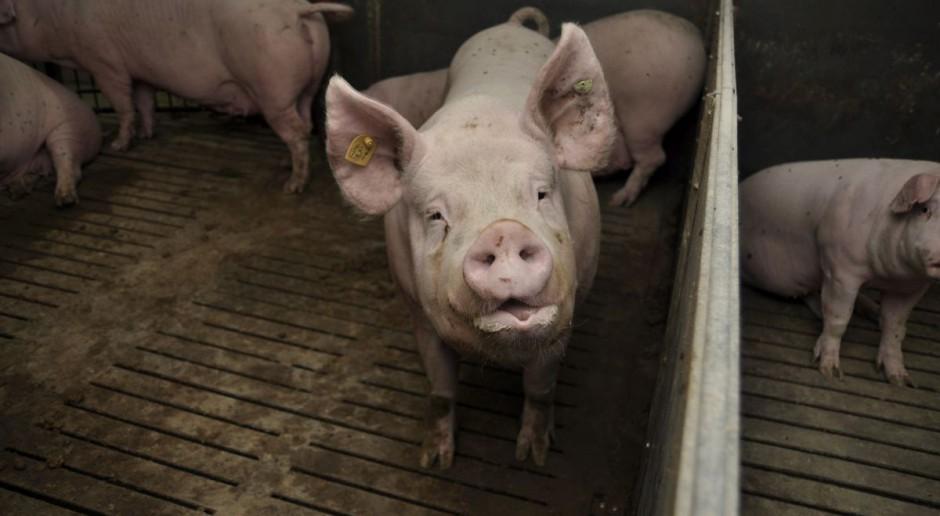 KRIR: będą zmiany w przepisach dotyczących identyfikacji zwierząt