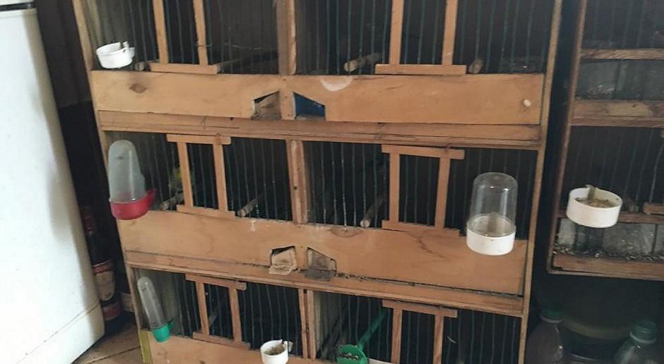 Policjanci zlikwidowali nielegalną hodowlę ptaków