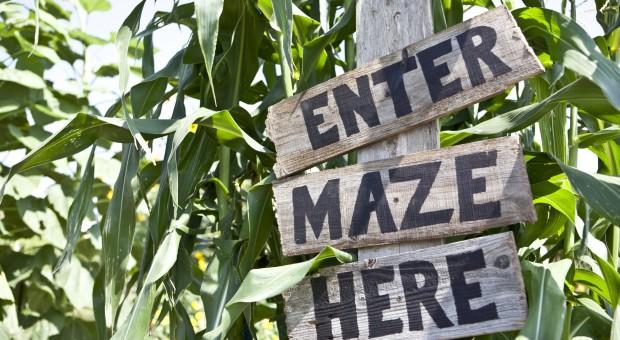 Zabłądzić w kukurydzianym labiryncie