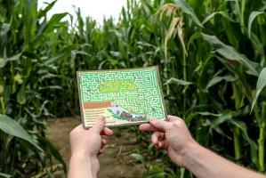 Labirynt w polu kukurydzy zlokalizowany jest 5 km przed Władysławowem w miejscowości Swarzewo; Fot. labirynt-wladyslawowo.pl