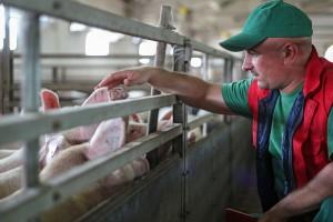 Obniżono Ci cenę skupu świń ze względu na strefę ASF? Zgłoś to do UOKiK