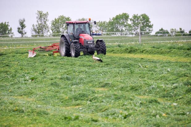 Gdy łąka skoszona – co dalej z nawożeniem?