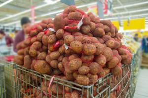 UE: Uprawa ziemniaków drastycznie upada