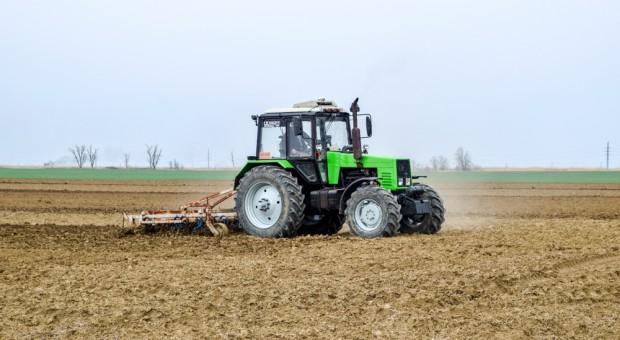 Wieksza powierzchnia zasiewów zbóż w tym roku