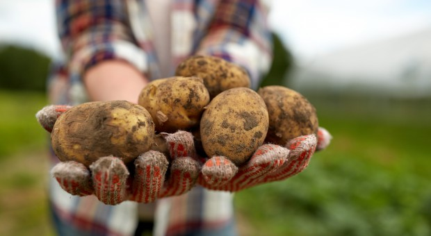 Nie wykorzystujemy potencjału ekologicznego rolnictwa