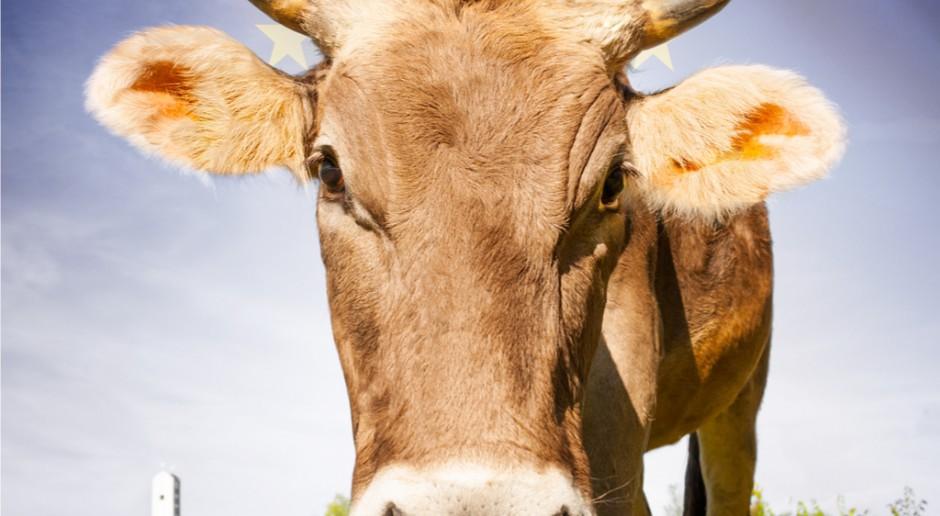 Bułgaria: Krowa Penka i unijne regulacje