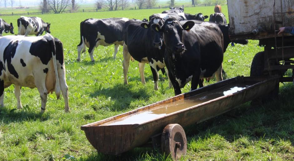 Woda podstawą dawki pokarmowej bydła podczas upałów