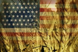 Potężny spadek cen zbóż po publikacji raportu USDA