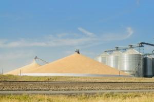 Ukraina wyeksportowała 37 mln ton zbóż