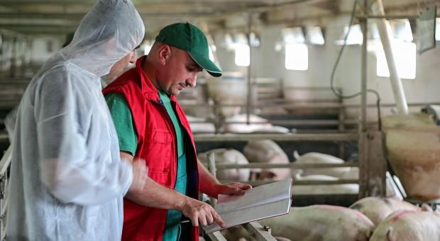 ASF w fermie liczącej ok. 5 tys. świń