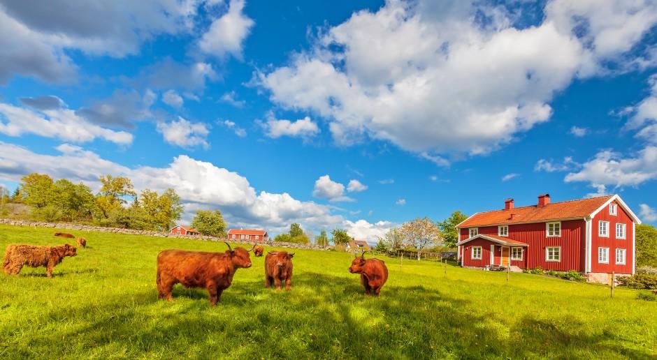ETO: W Unii szybko spada liczba gospodarstw rolnych
