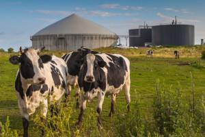 Copa-Cogeca za zwiększeniem udziału biomasy w energetyce