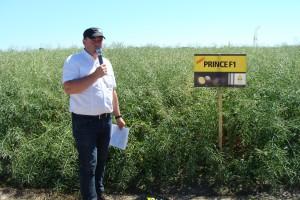 Artur Kozera z firmy Rapool prezentuje nową odmianę Prince F1, jedną z pierwszych w Europie odmian mieszańcowych rzepaku w typie kompaktowym z odpornością na wirusa żółtaczki rzepy (TuYV), fot. ArT