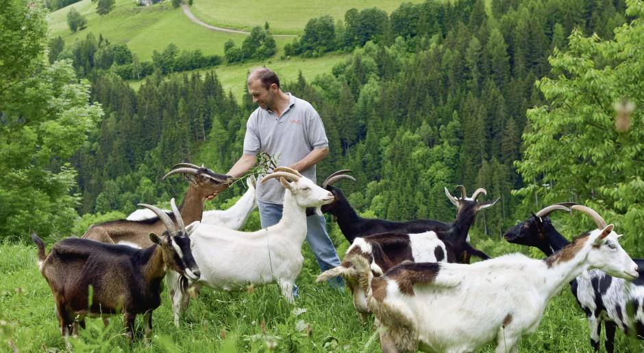 KE: Wspólna polityka rolna oszczędna, ale bardziej przyjazna dla środowiska