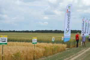 Nowości odmianowe zbóż ozimych Danko