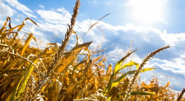 O szacowanie szkód wywołanych suszą trzeba wystąpić pisemnie