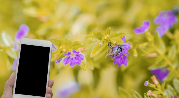 Aplikacja na smartfona pomoże pszczelarzom i pszczołom