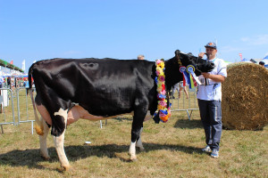 Czempion w kategorii krowy PHF odmiany HO w II laktacji oraz superczempion wśród krów hodowli Waldemara Plantowskiego