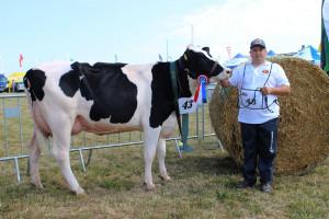 Czempion w kategorii krowy PHF odmiany HO w I laktacji hodowli Sebastiana Pielecha
