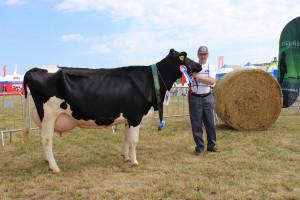 Czempion w kategorii krowy PHF odmiany HO w III i dalszej laktacji hodowli Andrzeja Jeznacha