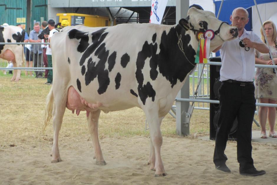 Reyna 6 (wyhodowana w OHZ Dębołęka) – czempion w kategorii krów w drugiej laktacji, oraz superczempion