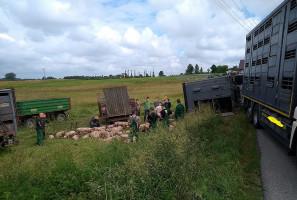 Strażakom w ratowaniu zwierząt z transportu pomogli okoliczni rolnicy