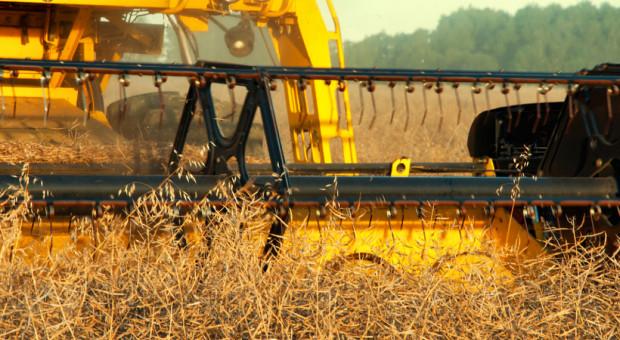 Przez suszę mniejsze będą zbiory zbóż i rzepaku