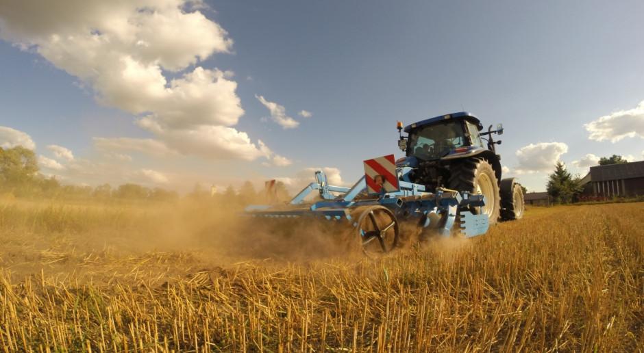 Jak przygotować pole pod rzepak w warunkach suszy?
