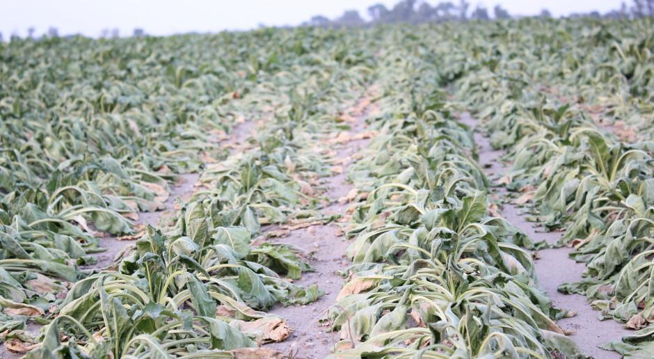 PSL w liście do władz lokalnych prosi o pomoc dla rolników dotkniętych suszą