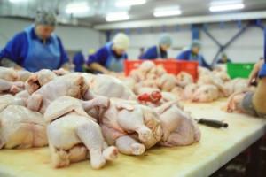 Cła antydumpingowe na mięso drobiowe oburzają Brazylię