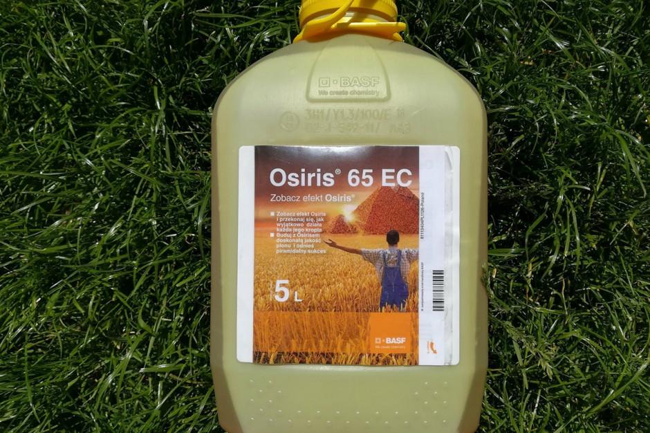 Mniej więcej w połowie maja, gdy pszenica zaczęła się kłosić, zastosowałem Osiris 65 EC