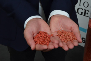 Nasiona zaprawiane z wykorzystaniem polimeru (po lewej) i bez niego (po prawej stronie)