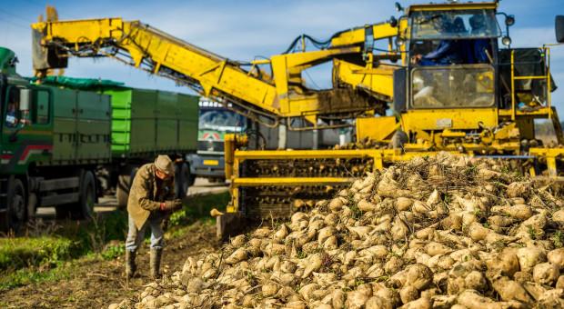 Rolnik: Uprawa buraków dla koncernu Suedzucker to stracony czas