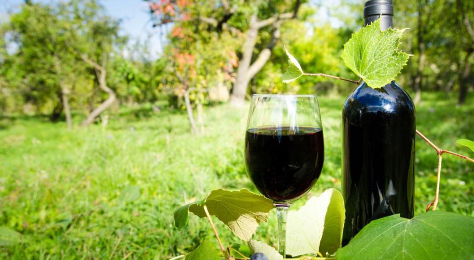 Zapowiada się urodzajny rok w uprawie winorośli na Podkarpaciu
