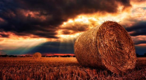 Na Ukrainie zebrano ponad 1 mln ton zbóż