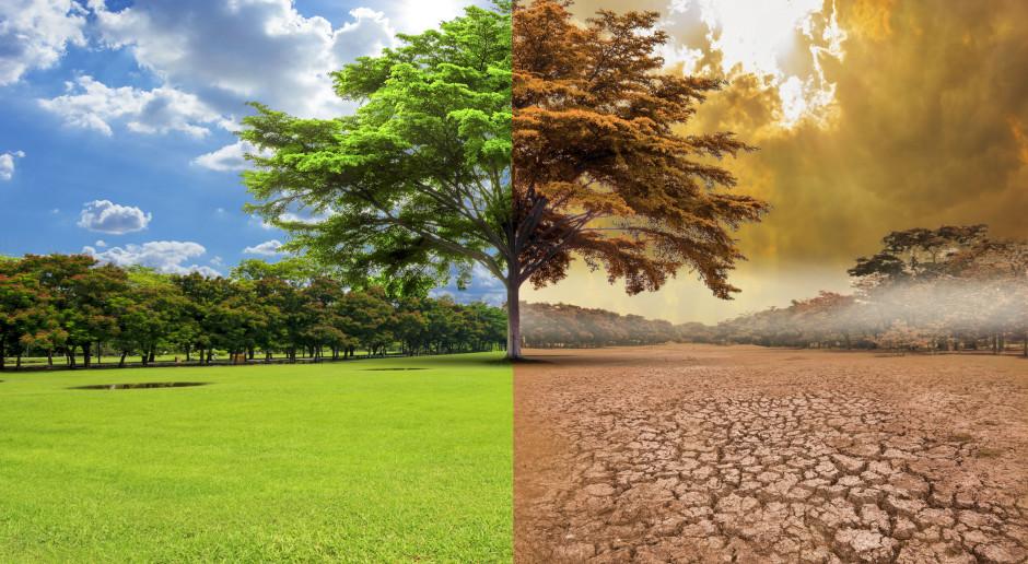 Jak szacować straty po suszy na łąkach?