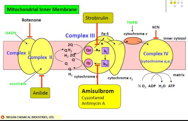 Schemat 1. Mechanizm oddychania
