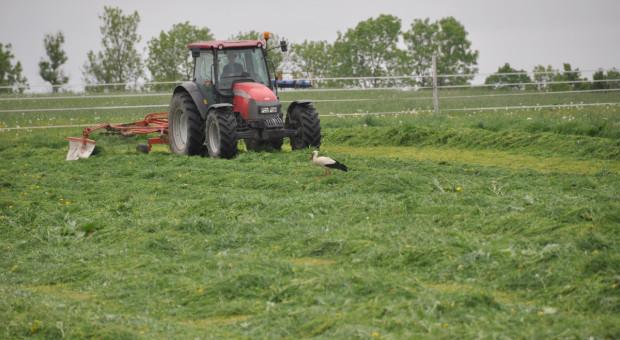 Aktualne trendy w uprawie użytków zielonych – wywiad z prezesem DLF Seeds