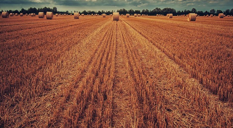 Ukraina: Zbiory zbóż trwają już w 12 obwodach