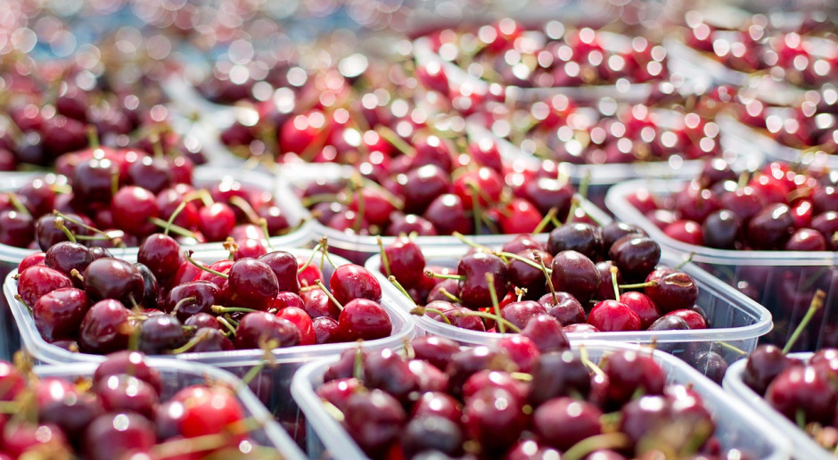Niemcy: Spodziewane większe zbiory wiśni i czereśni