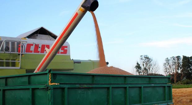 """Nie ma podstaw do tego, by skupy odmawiały przyjęcia płodów rolnych z """"terenów ASF"""""""