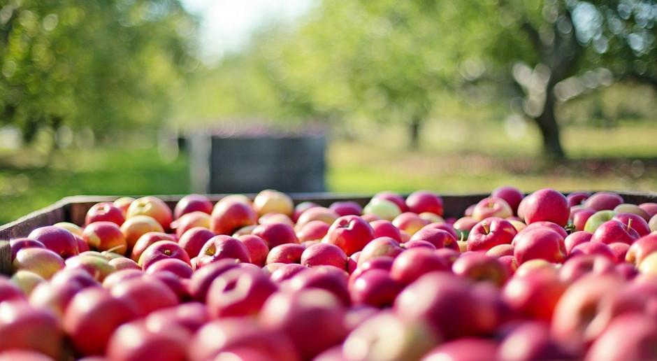 Trzy tygodnie wcześniej niż w 2017 roku w Broniszach  już są polskie jabłka i śliwki