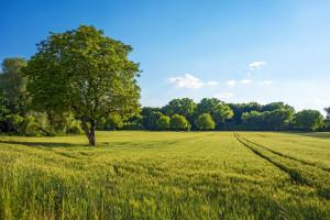 Ziemia już oddana byłym właścicielom?
