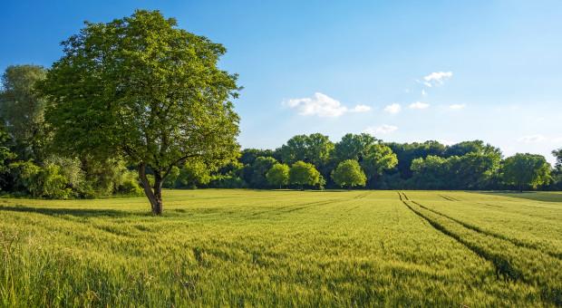 Opolskie: Ponad 700 sołectw jest w Regionalnym Programie Odnowy Wsi