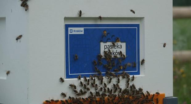 W Pasiece Kraków stanęły kolejne ule