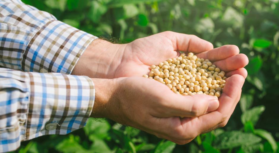 Stosowanie soi GMO w paszach może być przedłużone najwyżej o dwa lata