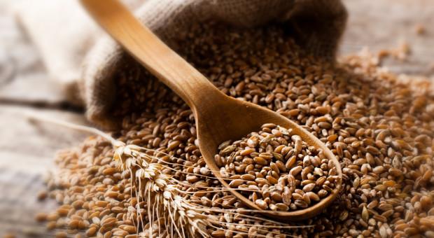 DBV: Przez suszę mniejsze zbiory zbóż w Niemczech