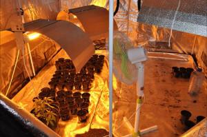 Sadzonki przygotowywano do rozsady na mobilnej plantacji, umieszczonej pod plandeką naczepy ciężarówki.