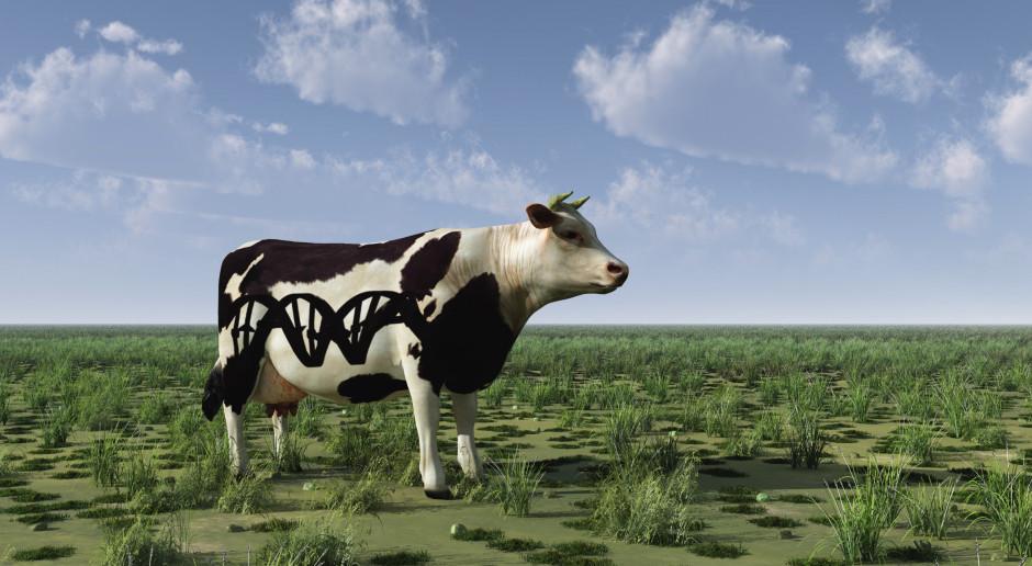 Hybrydyzacja sprzyjała udomowieniu i adaptacji bydła