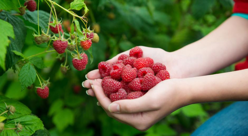 Niskie ceny skupu owoców, rolnicy nie zarobią